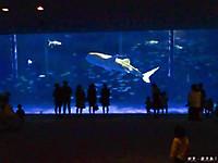 Aquarium3