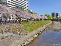 Sakura7_20190709194901
